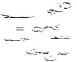 white slithery stock snake png by madetobeunique