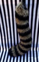 Raccoon tail side by fenrirschild