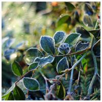 frozen garden III by miss-gardener