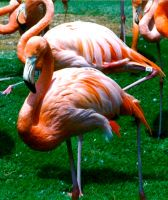 'Flamingos' by TADASHI-STATION