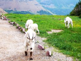 Chased by Mountain Goats by QuantumInferno