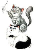 Cats by msciuto