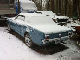 Frozen Mustang 2 by NekoVWMike