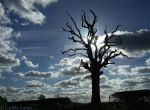 dead tree 65 by Gwitha-Kathes
