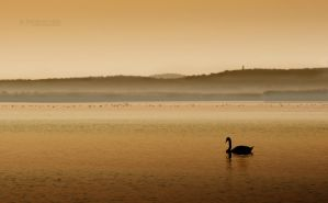 Peace of the lake by EdSinger