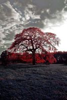 The Red Tree by jeffreyverity