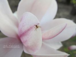 Spider and Magnolia 1 by NelEilis