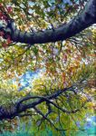 trees in autumn by christinemb