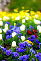 Colors of Spring by alahay