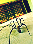 Another Malagasy Spider by andotsiry