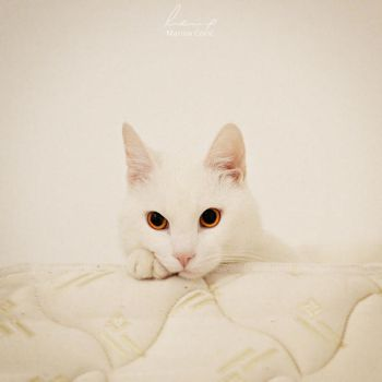 The Cutest by MarinaCoric
