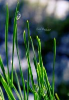 Raindrop by little-white-daisy