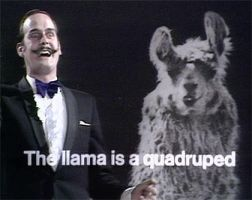 The Llama is a Quadruped by raspil