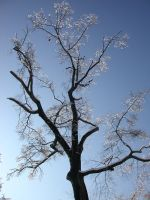 Wintersky branches 2 by Reyphotos