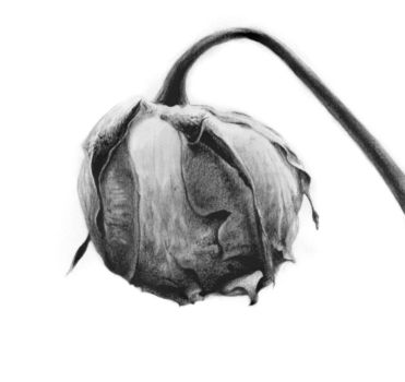 dead flower 2 by electriclover