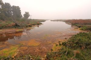 Misty Assateague Island Marsh by somadjinn