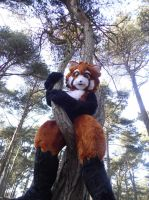 Look Rikku is good at climbing trees! by KyoukaKami