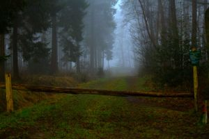 Mysterious Foggy Forest by RMuller