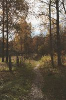 Out in the autumn nature by Theleppan
