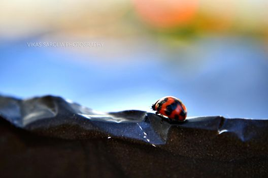 Red Bug by minuts2midnyt