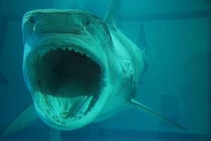 shark attack by bewing
