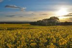 oilseed glow by LowWinterSun08