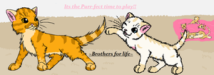 Purr-fect play time!! by GiggleKittyx3