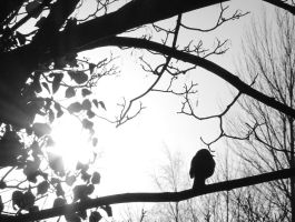 Black Bird and Sunlight by skeletowl
