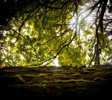 Dappled Green Shelter by d-igitalsuicide