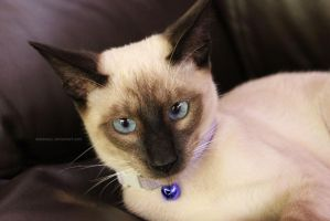 Kitty 3 by astraeos1