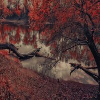 breaking the rules by ildiko-neer