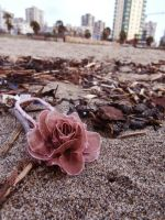 Some small fabric rose on the beach by Shyruban