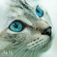 Mimi The Cat by Arkus83