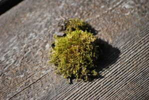 moss 1 by meihua-stock
