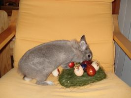 Lujza starring as Easter bunny by Tuile-jewellery