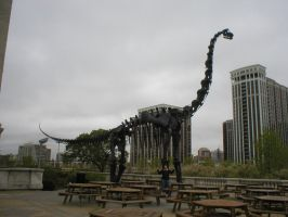 Brachiosaurus in Chicago by Carnosaur