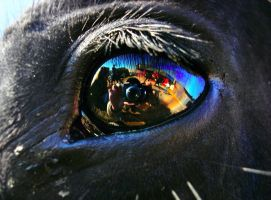 In the eye of the horse by TheSwanDive