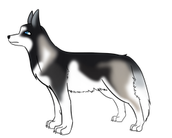 Siberian Husky by atlas-rabbit