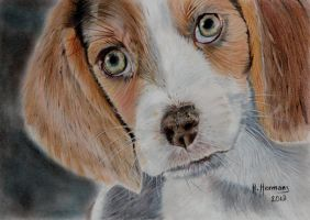 Beagle by HendrikHermans