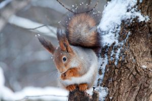 A squirrel by Mitoka