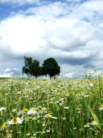 A summer meadow by Tricia-Danby