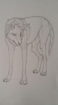 Maned Wolf by QuinnyTheWolf