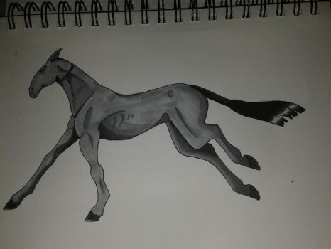 Ahal-teke mix breed with no name by emogirlwolf