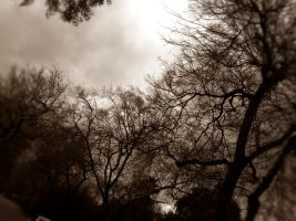 Trees in Sepia by GeneLythgow