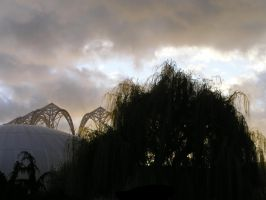 Willow and Arches by kelida