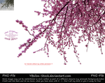 Branches with pink blossoms by YBsilon-Stock by YBsilon-Stock