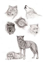 wolves study by leywan