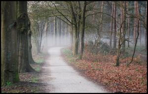 Going on a misty path by jchanders