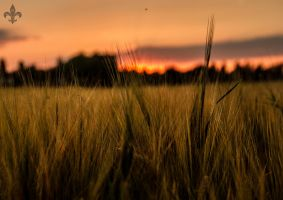 fields of the setting sun 05 by Katyma