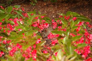 Baby Bunny in the flowers by AquaVixie
